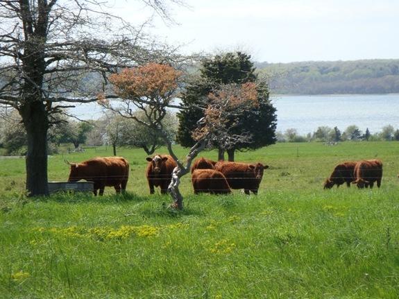 Farm pastures of Watson Farm in Jamestown, Rhode Island