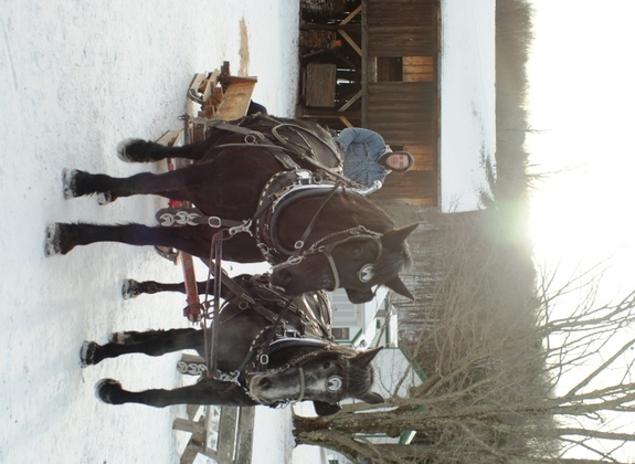 Horse-drawn sleigh rides are a fun part of the Ice Harvest Festival