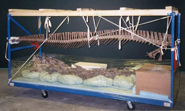 rolling moving cart with dinosaur neck laying on the bottom and tail hanging from above