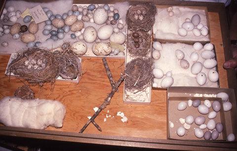 collection of bird eggs
